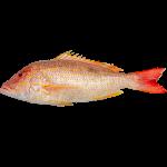 Peixes Frescos/Congelados