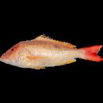Fresh/Frozen Fish